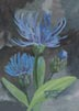 Centaurea (watercolor, prints, note card, ACEO)