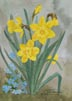 Daffodil Time (watercolor, prints, note card)