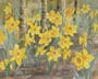 Daffodils (watercolor, prints, note card, ACEO, magnet)