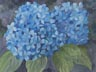 Blue Hydrangea (watercolor, prints, note card)