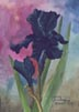 Black Iris (watercolor, prints on paper and canvas)