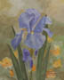 Mid-May Iris (watercolor, prints on paper and canvas)