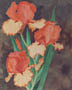 Orange Iris (watercolor, prints, note card)