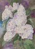 White Lilac (watercolor, prints, note card, ACEO)