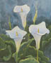 Three Calla Blossoms (watercolor, prints, note card)