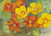Nasturtiums (watercolor, prints on paper and canvas)
