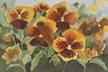 Bright Pansies (watercolor, prints, note card)