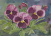 Rose Pansies (watercolor, prints, note card, ACEO)