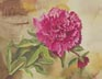 Mom's Peony (watercolor, prints, note card)
