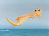 High Flying Gecko (pastel, prints on paper and canvas)