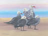 Heermann's On The Sand (pastel, prints, note card, ACEO, magnet)