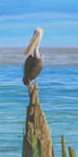Pelican On A Piling (pastel, prints, note card, ACEO, magnet)