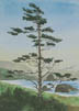 Lone Tree At Ecola Park (watercolor, prints on paper and canvas)